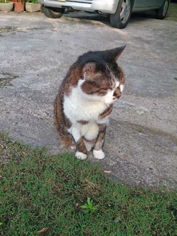 久しぶりに見かけたウォーキングルートの猫元気そうで何より